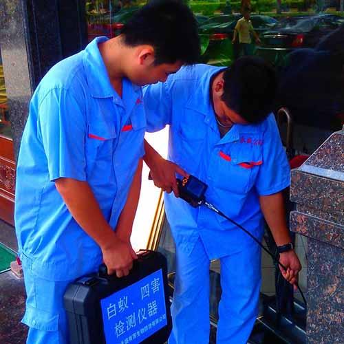 中山白蟻檢測服務